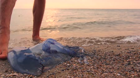 erek : Mans legs are passing by dead, jellyfish in shallow sea water. Tourist is passing by carcass of dead huge blue jellyfish, walking barefoot through shallow sea water. H.264 video codec