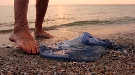 şişme : Man is touching carcass of dead huge blue jellyfish barefoot with enlarged veins washed up by the sea on sandy beach. H.264 video codec Stok Video