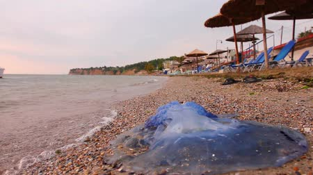 ısırgan otu : Big, blue, dead, jellyfish in shallow sea water. Carcass of dead huge blue jellyfish is washed up by the sea on empty public sandy beach. H.264 video codec