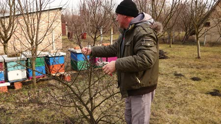 borowina : Farmer is pruning branches of fruit trees in orchard using loppers at early springtime cloudy day