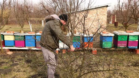 sıkıcı iş : Farmer is pruning branches of fruit trees in orchard using loppers at early springtime cloudy day