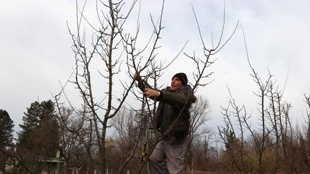 sıkıcı iş : Farmer is pruning branches of fruit trees in orchard using loppers at early springtime day using ladders