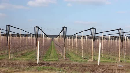 패스 : Side view on lines of vineyard rows Side view on leafless rows of vineyards at early spring. Photo - JPEG video codec