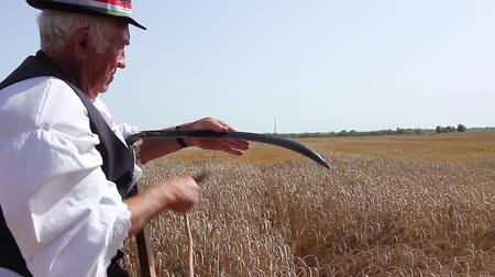 apontador : Muzlja, Vojvodina, Serbia - July 05, 2014: XXXI Traditionally wheat harvest. Farmer is sharpening, ironing, repair the blade on his scythe using whetstone. H.264 video codec Stock Footage