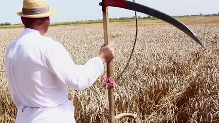 reaping : Farmer is looking at grain field. Farmer is holding scythe in front of field with mature wheat. H.264 video codec Stock Footage