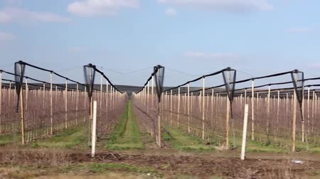 szőlőművelés : Side view on lines of vineyard rows. Side view on leafless rows of vineyards at early spring. H.264 video codec
