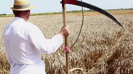 bámul : Farmer is looking at grain field. Farmer is holding scythe in front of field with mature wheat.  Photo - JPEG video codec