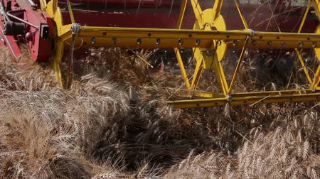mechanization : Combine harvester harvest ripe wheat. Agricultural combine is cutting and harvesting wheat on farm fields. Photo Stock Footage