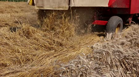 hay mowing : Combine harvester harvest ripe wheat. Agricultural combine is cutting and harvesting wheat on farm fields. Photo Stock Footage