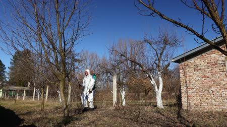 macacão : Farmer in protective clothing sprays fruit trees in orchard using long sprayer to protect them with chemicals from fungal disease or vermin at early springtime.