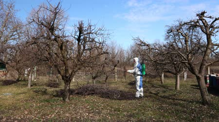 postřikovač : Farmer in protective clothing sprays fruit trees in orchard using long sprayer to protect them with chemicals from fungal disease or vermin at early springtime.