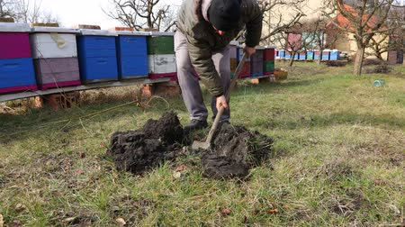 przeszczep : Gardener is using shovel to dig a hole for planting a fruit tree near apiary. Farmer is digging a hole for a fruit tree in orchard at early springtime, near bee colony, apiary. Canon EOS R 4K ALL-I