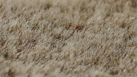 compelling : Synthetic fur background A fake fur material backdrop in true macro close up with a sliding camera move.