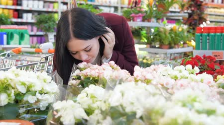 admires : Woman smelling flowers in greenhouse in Slow Motion Stock Footage
