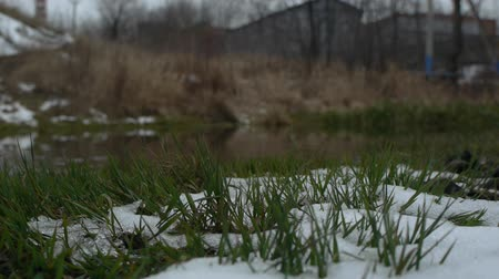 realtime : Black river, grass in snow