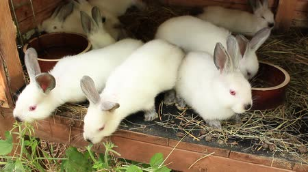 fofinho : A group of young rabbits in the hutch