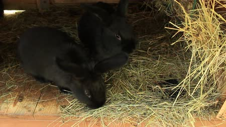 крупные планы : Black rabbit in the hutch