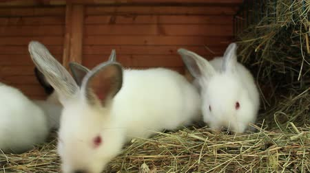 крупные планы : A group of young rabbits in the hutch