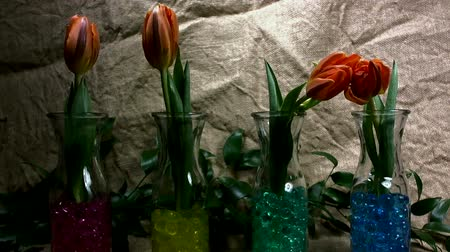 Flowers Are Jumping Against a  juta Background. Red Tulips in the Spring. 動画素材