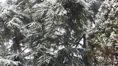 일월 : Snowfall in the forest park. Winter landscape in snow-covered park. Heavy snowfall.