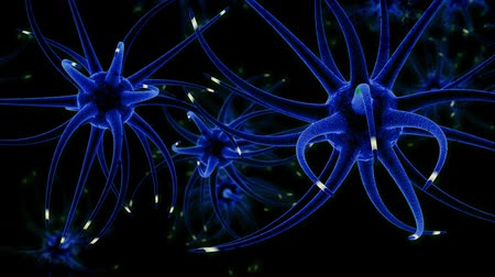 neuro : Neurons, Synapses, Action Potentials, and Neurotransmission