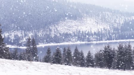 szron : winter landscape  snowing on fir trees Wideo