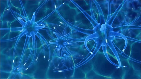 anatomie : Brain activity, neural disease signal