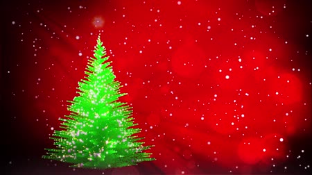 abeto : Green Christmas tree growing on red winter background