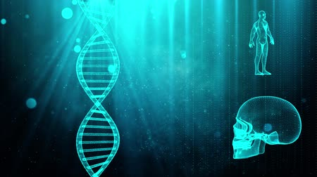 zenuwstelsel : Medical background with DNA strand  skull and human body Stockvideo