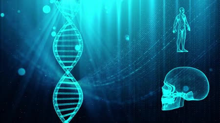 gergin : Medical background with DNA strand  skull and human body Stok Video