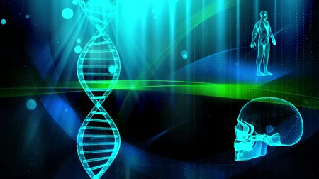 humans : Medical background with DNA strand  skull and human body Stock Footage