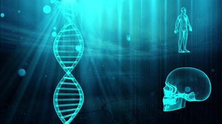ideges : Medical background with DNA strand  skull and human body Stock mozgókép