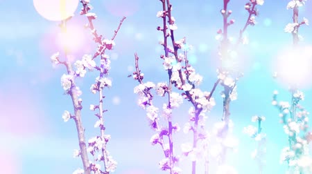 florescente : Spring background with blooming trees and bees Stock Footage