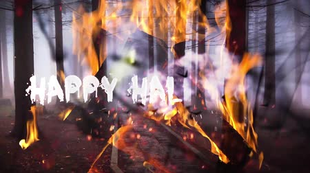 fruit bat : Haunted forest happy halloween background Stock Footage