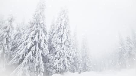 avusturya : Winter wonderland snowy fir trees