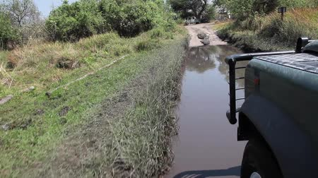safari animals : Truck rides over mire in South Africa Stock Footage