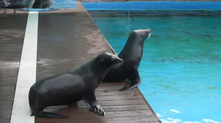 Performance of fur seals in the water park