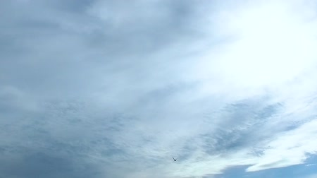 Slow Motion: A swift bird flying in a blue sky. 120fps.