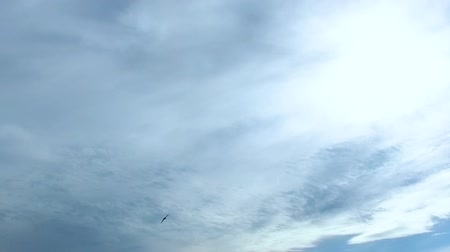 sereg : Bird black swift (lat. APUS) flying in the blue sky with clouds. Slow Mo. Stock mozgókép