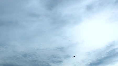 romsvetnik : Slow motion: Bird Swift (lat. Apodidae) flies in front of the camera in the cloudy sky. Close-up.