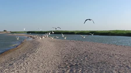 Many gulls fly up on the seashore. Slow motion. Стоковые видеозаписи