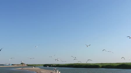 romsvetnik : Slow motion. Many gulls fly to the sky above the sea shore.