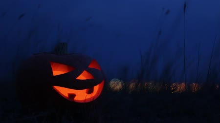 Lamp Jack in the evening among the tall grass. One of the main attributes of the Halloween holiday is a carved pumpkin with a backlight inside. Стоковые видеозаписи