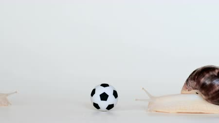 lesma : The snail slowly creeps up to the soccer ball on a white background. Animals play football. Slow cochlea. Vídeos