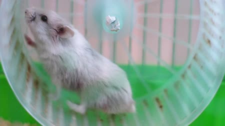 tekerlekler : Hamster on wheel in a cage
