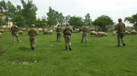 special unit : Soldiers armed squad in military clothing camouflage going on patrol in a village through a flock of sheep