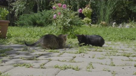 крошечный : Poor homeless hungry little cats looking for food eating in the park