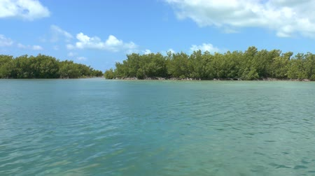 mangue : Mangrove forest on shores of Cayo Largo, Cuba