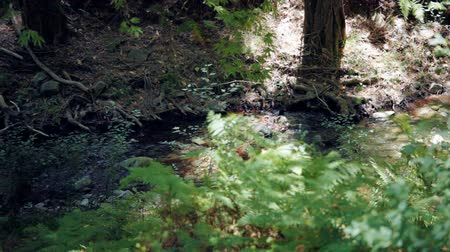 ciprus : Forest spring in Trodos mountains, Cyprus