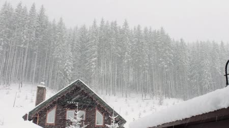 fülke : Lots of snow and strong wind stirs the trees